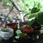 7月からは庄屋茶寮で掛川の深むし茶とお茶菓子のセットをお召し上がり頂けます