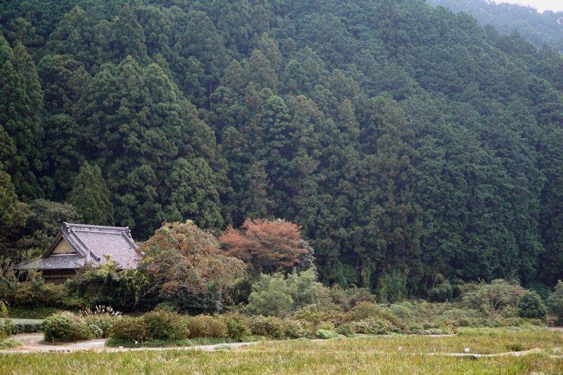 秋には加茂荘南奥の古寺脇の大きな柿の木が鈴なりに実をつけます