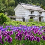 加茂荘の蔵と花菖蒲