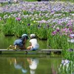 B04d花菖蒲園の風景