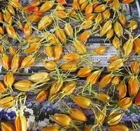 染飯を染めるクチナシの実を干しているところ - コピー - コピー