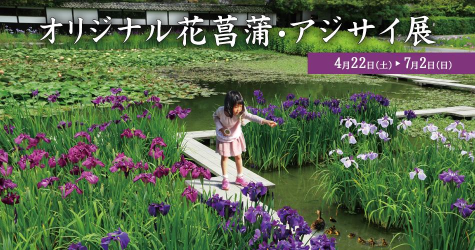 2017年花菖蒲・アジサイ展