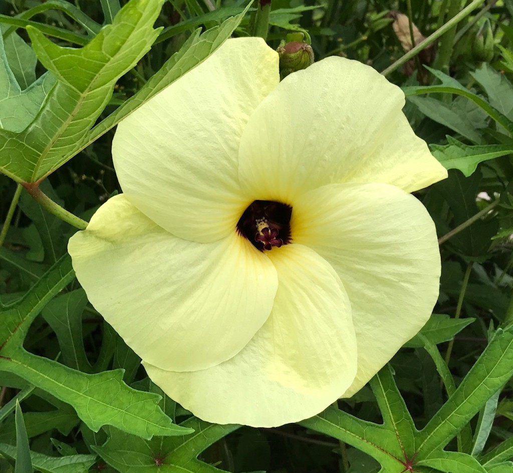 0723③花ものがたり