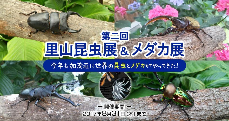 第二回里山昆虫展&メダカ展