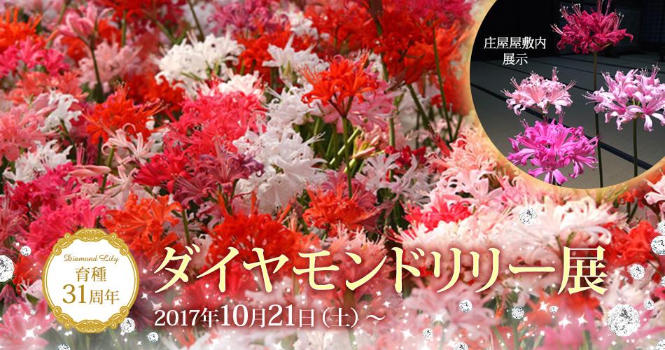 育種31周年ダイヤモンドリリー展 2017年10月21日(土)~