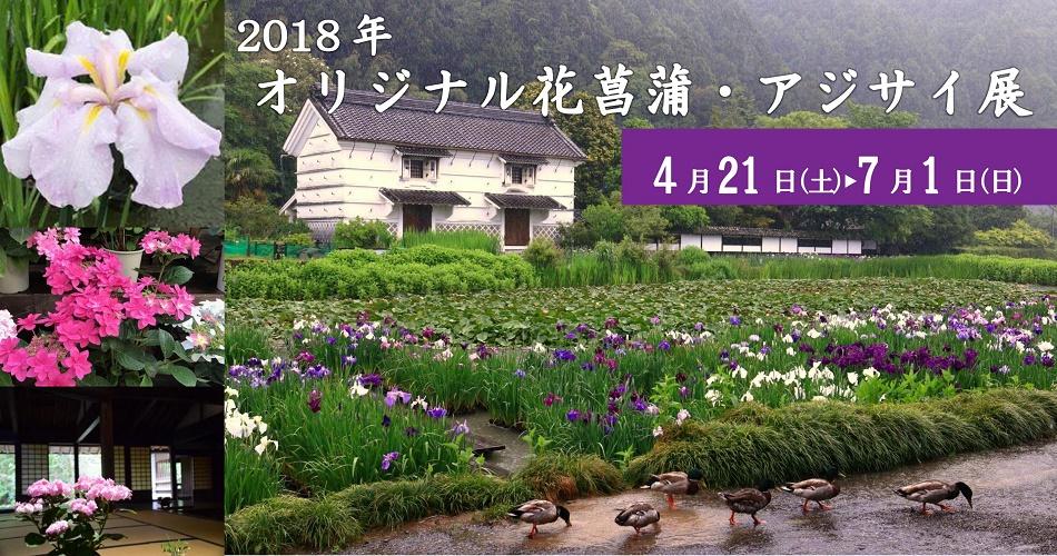 2018年オリジナル花菖蒲・アジサイ展