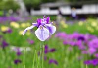 加茂荘花鳥園3