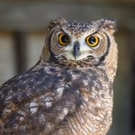 A cute and gentle owl will welcome you
