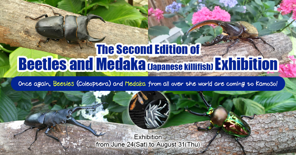 The Second Edition of Beetles and Medaka (Japanese killifish) Exhibition