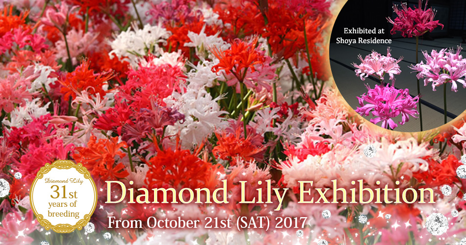 31st years of breeding Diamond Lily Exhibition From October 21st (SAT) 2017 Exhibited at Shoya Residence