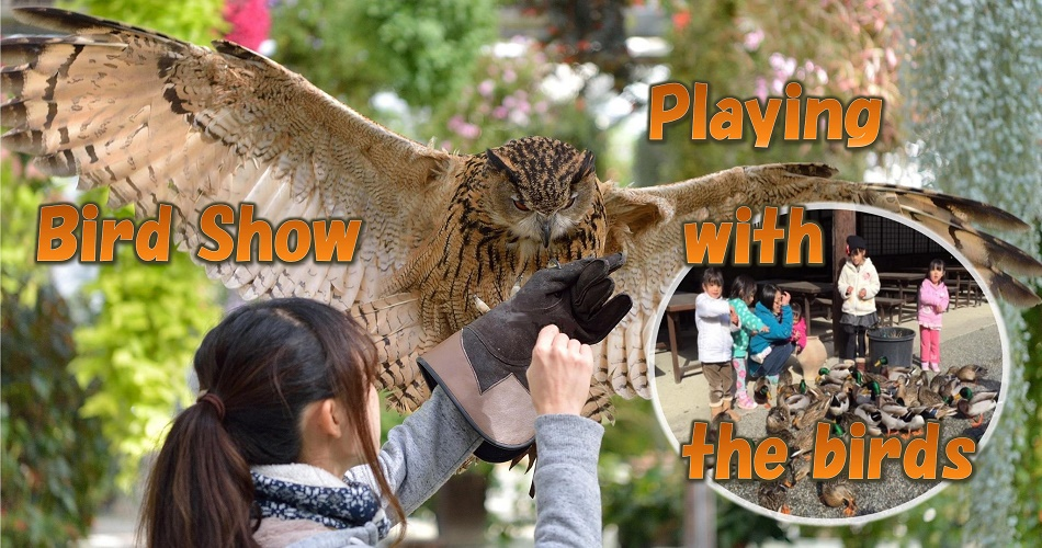 Birds Show/Interactiong with birds
